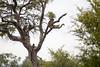 Baboon Kruger_14-03-02__O6B0293
