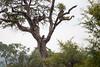 Baboon Kruger_14-03-02__O6B0295