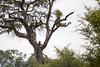 Baboon Kruger_14-03-02__O6B0294