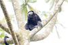 Howler monkeys_08-07-20_08-07-20_0091_IMG_1777
