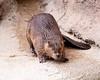 Beaver Tucson_10-10-23_IMG_239-1077613199-O
