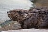 Beaver Tucson_10-10-23_7I2B032-1077612980-O