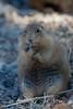 PrarieDog Tucson_10-10-23_IMG_-1077570847-O