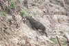 Capybara Pantanal_7I2B8821_10--1085940198-O