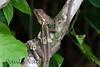 BrnBasilisk_Lizards (66)_06-07-643504630-O