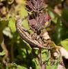 Lizard BotGard_7I2B6608_2011-0-1434019868-O