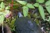 FloridaRedbelly_Turtles Corksc-1193310162-O