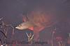 TurtleLngNose DingDarlingFL_IM-1192027683-O