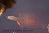 TurtleLngNose DingDarlingFL_IM-1192028006-O