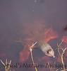 TurtleLngNose DingDarlingFL_IM-1192026874-O