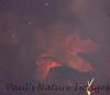TurtleLngNose DingDarlingFL_IM-1192026786-O