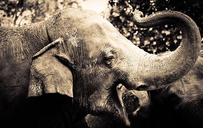 May 20, 2012 - Elephant