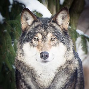 Wolfgang Wolf