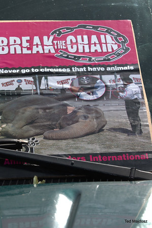 Animal Rights /Circus