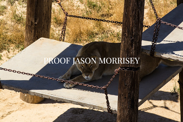 Animal Sanctuary, Hudson Colorado