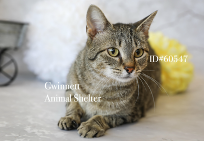 Animal Shelter 3/13/18