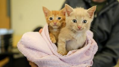Kitty City Kittys