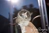 Grumpy Cat_6615-2