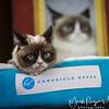 Grumpy Cat_6474