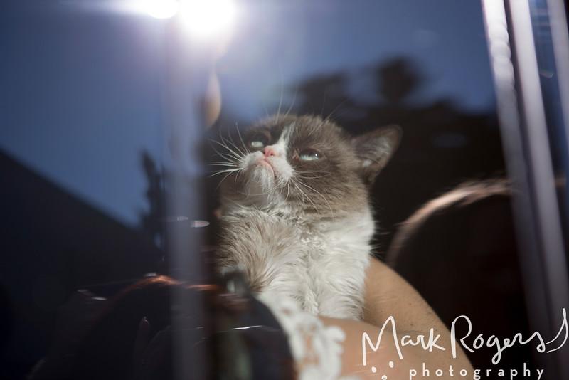 Grumpy Cat_6616-2