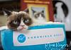 Grumpy Cat_6719-2
