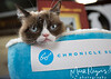 Grumpy Cat_6732-2