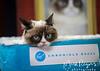 Grumpy Cat_6458