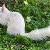 White Squirrel Nibbling