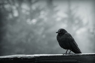 Perched in the Rain