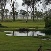Kangaroos and a Joey, Lake Weyba, Australia - January 2008