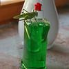 Whatdyamean it's not a plant? Grasshopper, Croatia - July 2009