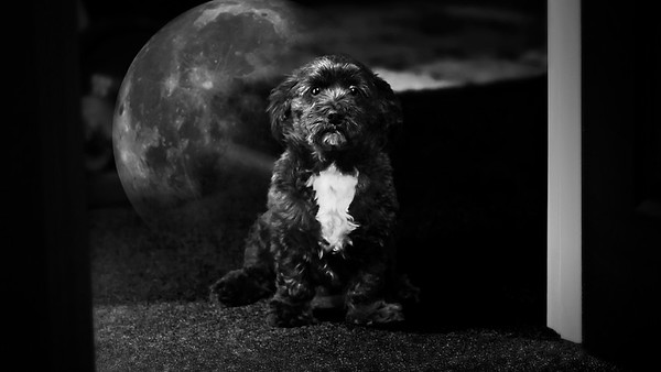 jack space dog