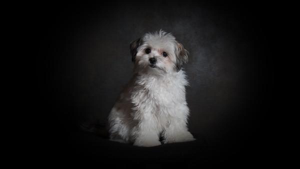 jp2 dog