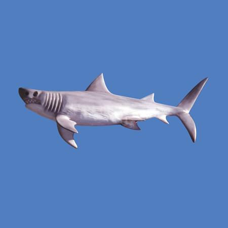 Shark, 6'L  #7129