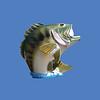 Bass, Jumping, 10'H  #7243