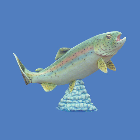 Rainbow Trout, 19'L  #7211