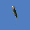 Parrot, 2'H  #7117