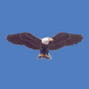 "Eagle, 10'6"" wingspan  #7070"
