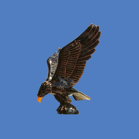 Eagle, 10'H  #7253