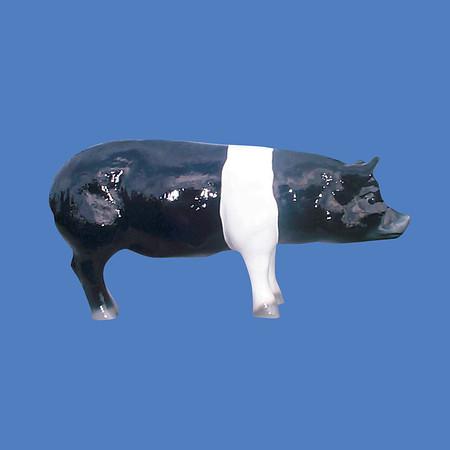 Pig, 2'H  #7007