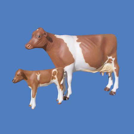 Cow, Guernsey #7190<br /> Calf, Guernsey  #7069
