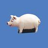 Pig, 4'H  #7006
