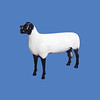 Suffolk Sheep #7021