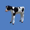 Calf #7001