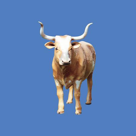 Longhorn Steer #7159