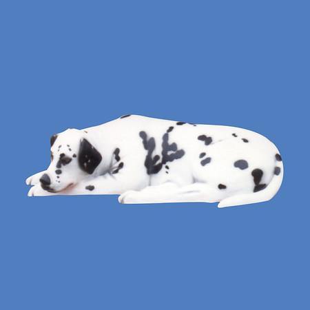 Laying Dalmatian #7066