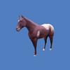 Quarter Horse #7010