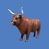 Highland Bull #7198