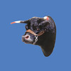 Black Steer Head #7163