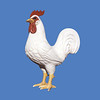 Rooster, 7'H  #7101